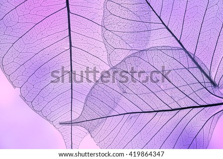 a leaf texture close up - Shutterstock ID 419864347