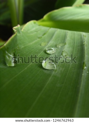 A leaf with rain drops #1246762963