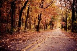 A leafy autumn road in Arkansas