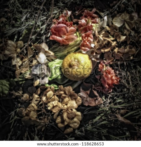 A Lemon Peel and Flowers on a Compost Heap/Artistically alienated to create a grungy somber atmosphere
