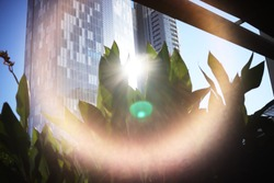 A lens flare from thesun between two buildings crowning a plant.
