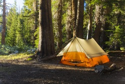A light colored tent sits in a pine forest as morning sunlight hits it from the side