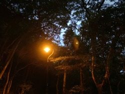 A lighted lamp post in the woods