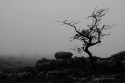 A limestone erratic boulder and karst landscape on Hampsfell above Grange-Over-Sands, in Cumbria, England, on a misty winters day.