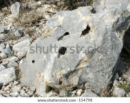 a limestone rock drilled full of holes , i wonder what made those?