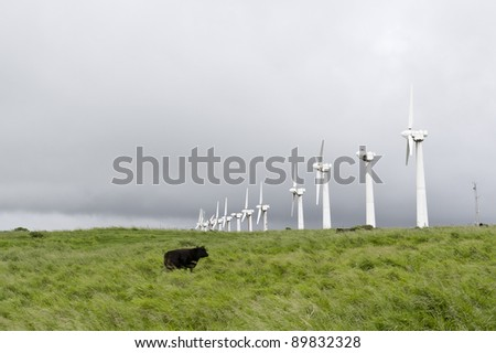 A line of old abandoned wind turbines and a cow on a foggy day. Big Island, Hawaii - stock photo