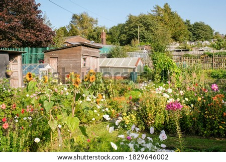 A line of rural allotments show a mix of colourful flowers, garden sheds and greenhouses. Foto stock ©