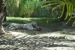 a lion sleeping in a zoo