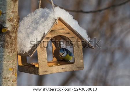 A little bird chickadee sitting on a the bird feeder / blue tit #1243858810