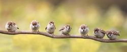 a little birds sitting on a branch funny opened their beaks in anticipation of the parents