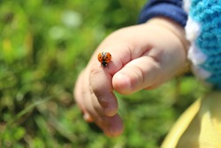 A little boy in the hands of the ladybug. Ladybug crawling on the child's hand