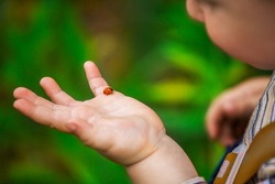 A little boy looks at the ladybird on his hand. Ladybug crawling on the hand of the child