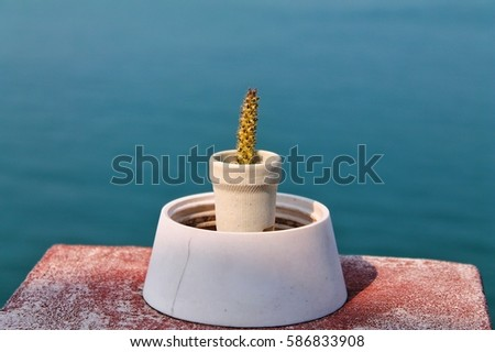 A Little Cactus On The Edge In Front Of Sea Thailand 586833908