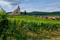 A little church between the vineyards in Alsace