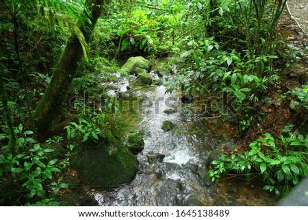 A little creek in Santa Elena Cloud Forest Reserve, Monteverde, Costa Rica. Stok fotoğraf ©