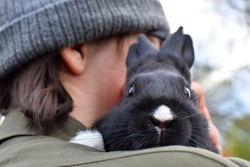 A little cute black bunny, rodent, gnawer, pet, friendship, young animal, boy, children, kid, white muzzle, black rabbit, sitting on shoulder, head, hair, care, paws, ears, holding in the arms, fur