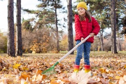 A little cute girl of 5-6 years old in red jacket raking in pile of autumn maple leaves in the backyard on a Sunny autumn day. Help cleaning up the fallen leaves.