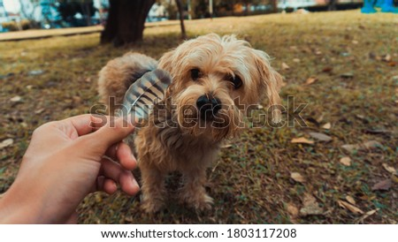 a little dog looking at a bird's feather Stock fotó ©