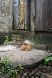 A little dog rests forlornly on a stone step outside in a sugar growing community in the Dominican Republic.