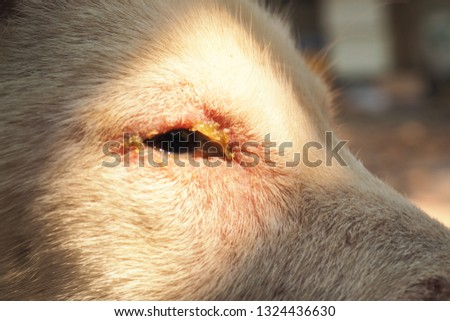 A little dog with Serious disease, Canine Distemper. #1324436630