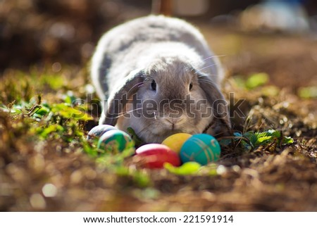 A little Easter rabbit sitting among colored eggs - stock photo