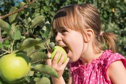 A little girl eat an apple from a tree