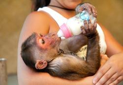 a little girl feeding a little monkey