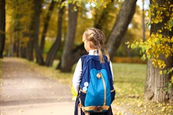 A little girl in a dress with pigtails holds large blue backpack and walks on road alley in park of autumn trees with yellow maple leaves in hand. First september day in elementary school.