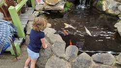 A little girl looking into a koi pond.