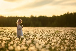 A little girl with is walking in a field of dandelions, she is collecting a bouquet. Image with selective focus.