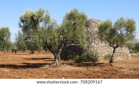 Bon A Little House Made Of Stones, A Tool Storage The Beautiful Olive Trees And  The