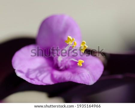 A little purple flower in ghe garden Imagine de stoc ©