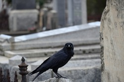 A little raven perched on part of a damaged stone monument, surrounded by graves in a cemetery