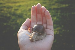 A little snail crawling on the human hand in evening sunlight on summer nature background in the park. Ecology concept.
