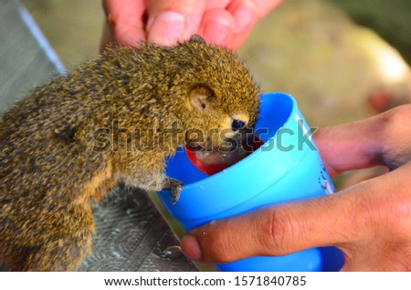 A little squirrel gets milk from an animal lover.