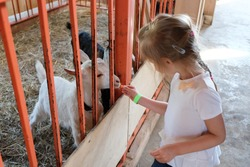 A little unrecognizable girl of the Caucasian race feeds goats with carrots in a contact zoo, on a farm. The concept of children's leisure, friendship and pet care.