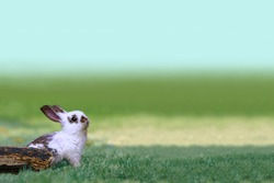 A little white rabbit stareing into the distance in the grass. Nature,Small Animals,Pet,Healing,Relaxation Image