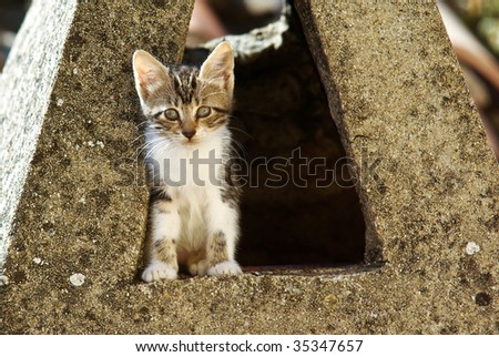 a little wild cat in a chimney