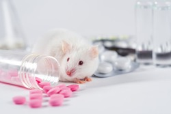 A live white laboratory experimental mouse sits on pills.Concept medical manipulation on animals,vaccine experiment,testing of drugs,vitamins.