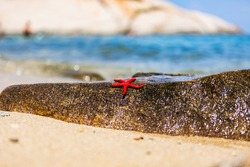 A lively beautiful bright red starfish with five curved tentacles lies on a warm wet granite stone on the sandy shore of the Mediterranean blue sea, the gentle summer sun reflects on the stone