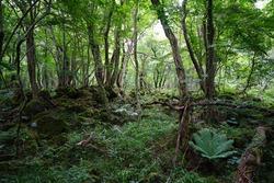 a lively dense forest in midsummer