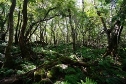 a lively dense forest in summer