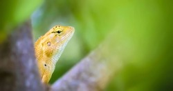 A lizard is a cold-blooded reptile that have long tails and four legs.