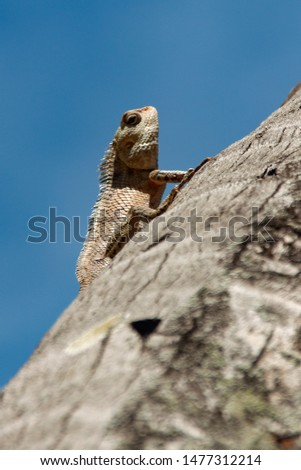 A lizard is climbing a tree #1477312214