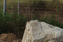 A lizard on a rock along with crows in the fence