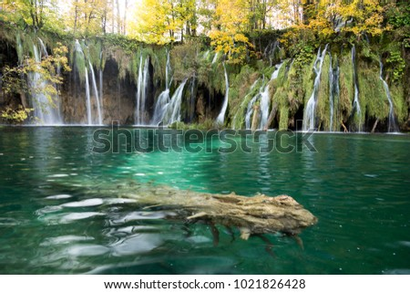 A log is submerged under the clear turquoise waters with waterfalls and golden and green trees in the background. This was taken in Plitvice Lakes National Park. The moss is light green. #1021826428