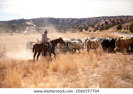 A lone cowboy is moving a small herd of cattle to a greener pasture, near Hatch, UT.
