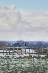 A lone crow perched on fence in a wintery field