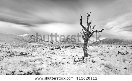 A lone dead tree on a snow covered Rannoch moor in the Scottish highlands