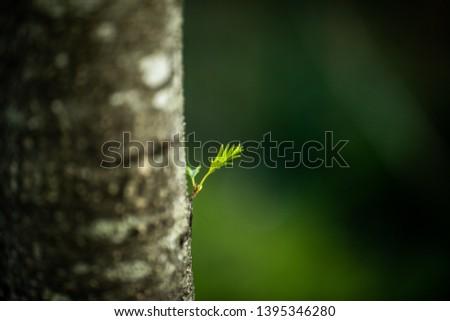 A lone leaf on a lone tree